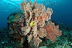 Soft corals with crinoid in the reef.