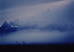 A flock of Canada geese fly through a fog-shrouded Grand Teton National Park in Wyoming.