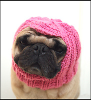 BNPS.co.uk (01202 558833)<br /> Pic: JessicaFurtado/BNPS<br /> <br /> ***Please use full byline***<br /> <br /> Pink balaclava<br /> <br /> Barking mad entrepreneur Jessica Lynne has set tails wagging after launching her own fashion line for pug dogs. The 22-year-old's hand knitted hats and costumes transform the cute canines into characters such as a ladybird, an alien, an aviator, Batman and even Minnie Mouse. Dog-mad Jessica was inspired to launch her canine couture after knitting her adopted pug a wacky hat to keep him warm through cold winters. The Snuggly Pug Alien hat was such a hit with fellow pug owners she founded her company All You Need is Pug while still studying for a university degree in English. Her crazy creations have also had the thumbs up from the dinky dogs themselves, who are happy to parade them with pride.