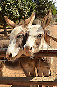 Stock photo of Donkey