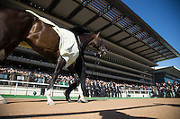 02-19-17 February Stakes Day Tokyo Japan