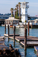 United States, California, San Francisco. Pier 39 is located at the edge of the Fisherman's Wharf district. The California sea lions attracts a lot of tourists. Forbes Island in the background.
