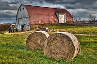 Heavy storm clouds blown by strong November winds move over the barn on farm land along Cleveland Avenue at Cooper Road. Hay bales recently rolled are ready for storage in the barn.One of the farm's bee hives sits beneath a tree bared of its leaves in the fall.