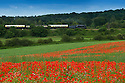 2014_06_22_steam_train_poppies