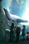 Sea Lions at the Oregon Zoo