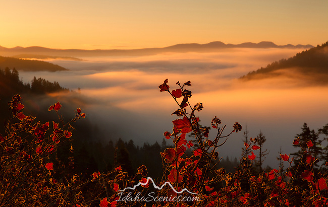 Idaho, North, Bonner County, Clark Fork. Morning sun illuminates the valley fog in the Coeur d'Alene Mountains in autumn.