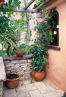 Cherry tomatoes vegetables growing in pot on patio in Mediterranean style Italianate garden and house, with container garden, trellis