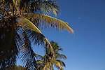 Palm trees in late afternoon light, Everglades National Park, Florida, USA