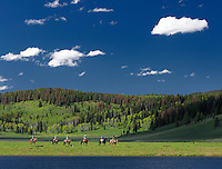Horseback riders at Lake, Flying A Ranch, Pinedale, Wyoming, USA