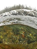 School of Ciscoes<br /> <br /> Paul Vecsei/Engbretson Underwater Photography