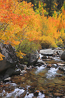 Bishop Creek Middle Fork - Fall Color