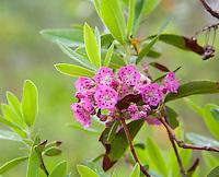 New Jersey - Pine Barrens Wildflowers