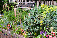 Edible landscaping with flowers and vegetables and herbs
