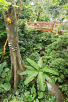 Elevated walkway above tree canopy at Edward Youde Aviary, Hong Kong Park, Hong Kong SAR, People's Repbulic of China, Asia