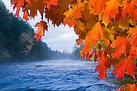 The Tahquamenon River with fall color in Tahquamenon Falls State Park near Newberry Michigan.