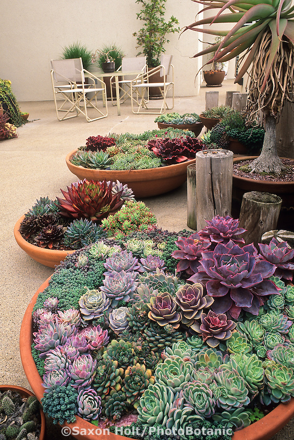 Containers of succulents on Santa Barbara patio