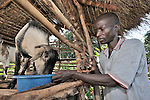 Davis Nyirenda feeds one of his goats in Thundira, Malawi. He participates in an animal husbandry program of the Church of Central Africa Presbyterianj. The meat, milk and fertilizer provided by the goats has improved the quality of his family's life, and he has shared the goats' offspring with his neighbors.