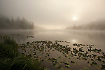 Lake and Fog with Lily Pads
