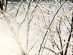 Sunlight shining through frozen, covered with ice tree branches. Abstract nature scenery.