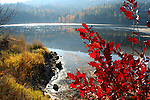 Red bush on the shore of Mica bay and reflections of autumn in the waters on Lake Coeur D Alene