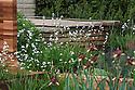 Homebase Teenage Cancer Trust Garden, designed by Joe Swift, RHS Chelsea Flower Show 2012. Plants include Libertia grandiflora, Iris 'Langport Wren', Verbascum petra and bronze fennel (Foeniculum vulgare 'Purpureum').