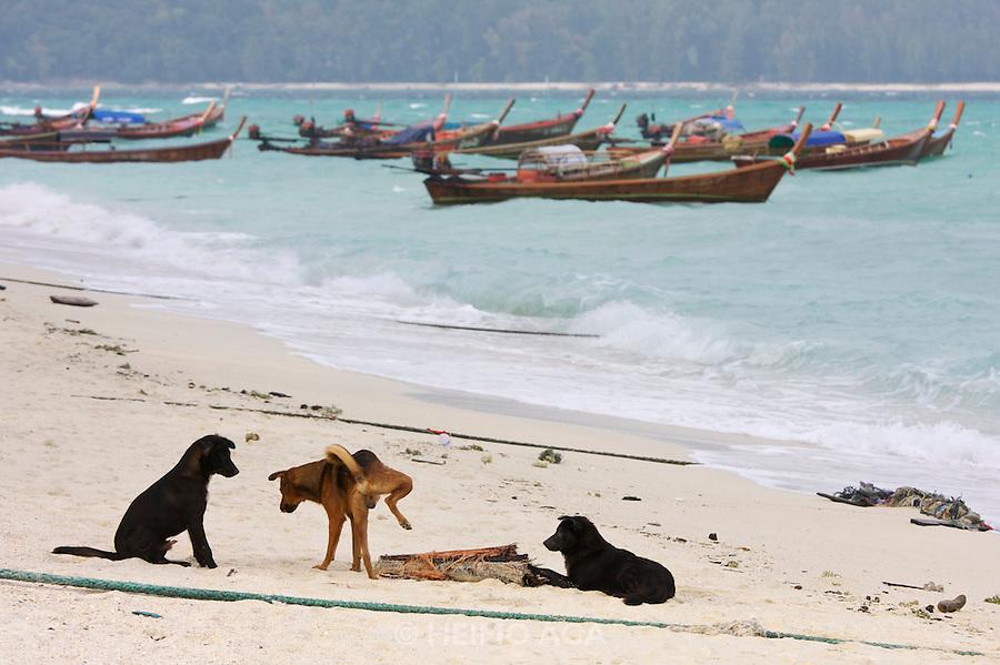 Beach dog marking territory.