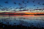 Scenic Birds