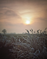 Winter Sunset, Occold, Suffolk, 2009