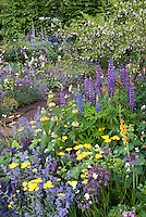 Spring or early summer garden of lupines, Achillea, Nepeta, Allium, irises and other perennial flowers together mixed types and colors