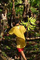 Viriunaveteri, Venezuela. Harvesting Banana and other products on a small field in the jungle...The village of Viriunaveteri consists of 15 huts around a muddy square. It's situated in the Venezuelan Amazone several days by boat from the nearest town. This community on the banks of the Casiquiare is one of the few Yanomami villages that actually has some contact with the outside world. Most other tribes live deeper in the jungle.