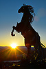 Whitehorse metal sculpture horse in sunrise