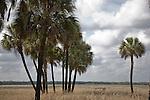 Palm trees at Myakka River State Park in Florida.