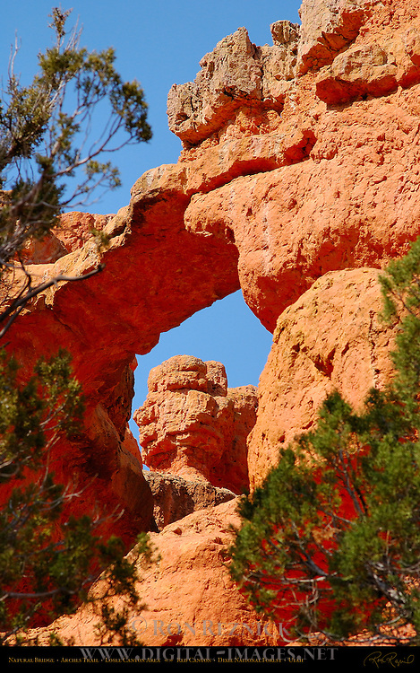 Natural Bridge, Arches Trail, Losee Canyon Area, Red Canyon, Dixie National Forest, Utah