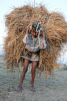 Sharafat, 16, hauls fodder for the buffaloes while the family camps along the Asan River.