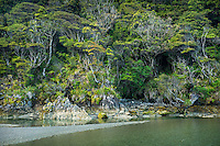 Pristine native forests at Smoothwater Bay, South Westland, World Heritage Area, New Zealand