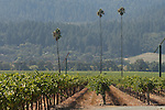 Three Palms vineyard, Napa Valley