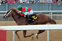 HOT SPRINGS, AR - MARCH 18: Untrapped #6, ridden by Javier Castellano before crossing the finish line in the Rebel Stakes race at Oaklawn Park on March 18, 2017 in Hot Springs, Arkansas. (Photo by Justin Manning/Eclipse Sportswire/Getty Images)
