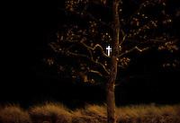 Religiøst symbol og et tre. Rocky Peak, Los Angeles. 22.12.10.