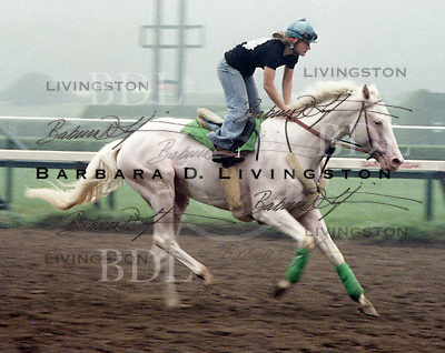 White Thoroughbred, Clarence Stewart, at Saratoga