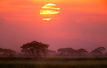 Savanna landscape, Amboseli National Park, Kenya