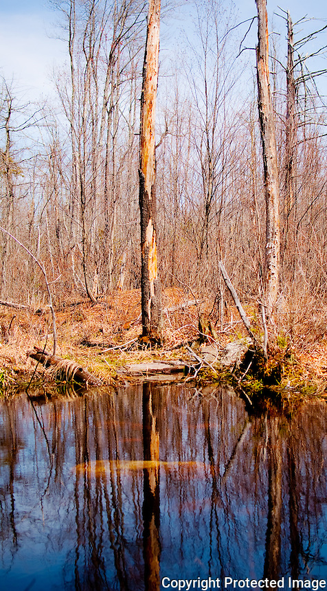 The swamp on a beautiful spring day.