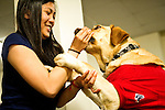 04/25/2011 - Medford/Somerville, Mass.  Chloe Wong, A13, feeds Warren, a certified therapy dog, a treat during a study break at Tilton Hall on Monday, April 25, 2011. (Alonso Nichols/Tufts University).