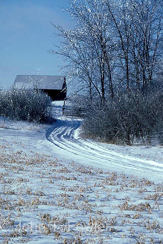 Winter scene, vertical, snow, blue sky, rural landscape, country, countryside, hoar frost, ice