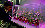 A young boy looks at thale cress at the Rocket Science display at the RHS Chelsea Flower Show in London