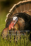 Turkey Pictures