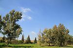 Eitan forest in the Coastal plain