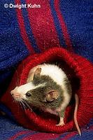 Pets (Small)