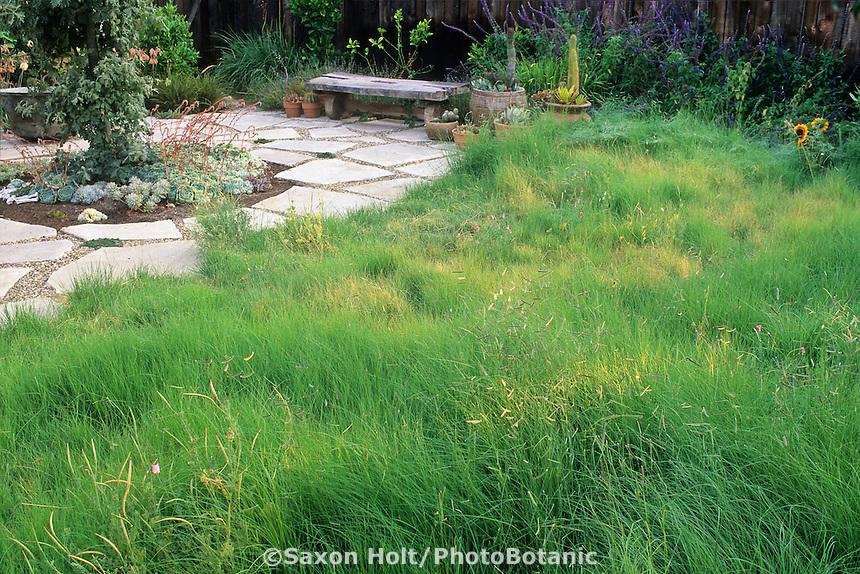 Small urban drought tolerant grass garden (Bouteloua gracilis-Blue Grama, Mosquito Grass)
