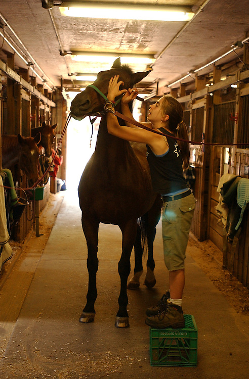 Begum gets a dose of eye medication by Kate Langford at Rock Creek Park Horse Center.