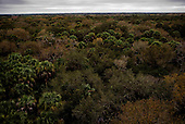 Myakka River State Park, Florida<br /> December 26, 2014<br /> <br /> Myakka River State Park is a Florida State Park, in Sarasota County and portions of southeastern Manatee County. The park is named after the Myakka River and consists of 37,000 acres (150 km?) and is one of the state's largest and oldest parks. Plant communities are a mixture of pine forests, scrub, and prairies. Wetlands in the park include marshes and cypress domes.